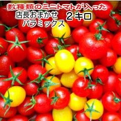 トマト ミニトマト 父の日 送料無料(一部地域を除く)当店一番人気!数種類のトマトが入った『店長おまかせ バラ(パックなし)ミックス』とってもお得な2キログラム