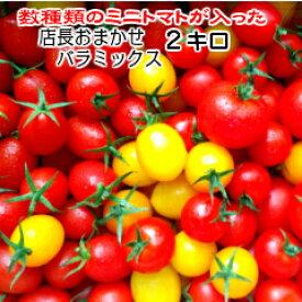 トマト ミニトマト 新鮮 送料無料(一部地域を除く)当店一番人気!数種類のトマトが入った『店長おまかせ バラ(パックなし)ミックス』とってもお得な2キログラム