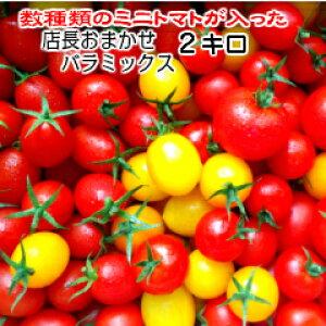 トマト ミニトマト 生産者から直送  宅配便なら全国送料無料 当店一番人気!数種類のミニトマトが入った『店長おまかせ バラ(パックなし)ミックス』とってもお得な2キログラム お入