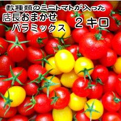 【トマト】【ミニトマト】【送料無料(一部地域を除く)】お待たせいたしましたトリアンジュヌーヴォーお届けします!当店一番人気!数種類のトマトが入った『店長おまかせ バラ(パックなし)ミックス』とってもお得な2キログラム