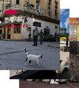500円クーポン発行中!岩合光昭の世界ネコ歩き 第2弾 ブルーレイ 全3枚セット動物カメラマン・岩合光昭さんがかわいいネコたちをもとめて世界を歩きます。【楽ギフ...