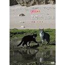 岩合光昭の世界ネコ歩き 沖縄 久高島 DVD