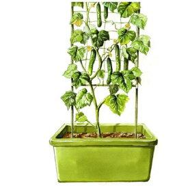 きゅうり支柱セット 11φ×180cm高さ ネット付き(3本を継いで組み立て式)きゅうりネット キュウリ支柱 園芸ネット 支柱 家庭菜園 野菜 ネット