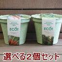 送料無料!野菜 栽培セット 選べる2個セット エコットM2個 エコポット 栽培キット 家庭菜園 ベランダ菜園 エコ プレゼ…