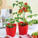 栽培セット 野菜 ハートマト ハート型のミニトマト栽培セット 栽培キット 家庭菜園 キット ミニトマト プレゼント 母…