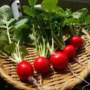 野菜 栽培セット 選べる2個セット 野菜 家庭菜園キット 家庭菜園セット 栽培キット 園芸 ガーデニング 家庭菜園 ベラ…