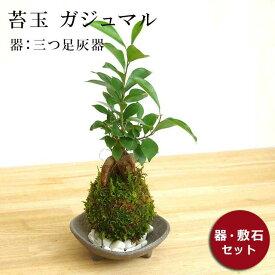 苔玉 ガジュマル 縁起良い 幸運の木 ユニーク 人気 沖縄 ガジュマルの苔玉・三つ足灰器セット