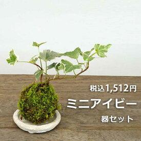 苔玉 ミニアイビー(ヘデラ)の苔玉・器セット 手のひらサイズでも本格的 一年中葉を楽しめる おためしこけだま かわいい おしゃれ