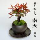 盆栽 南天の盆栽 下皿セット 黒鉢 縁起物 ギフト  贈り物 観葉植物 開運 難を転じる 紅葉 おめでたい 運気を上げる bonsai ミニ盆栽 風水