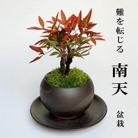 敬老の日盆栽 南天の盆栽 下皿セット 黒鉢 縁起物 ギフト 贈り物 観葉植物 開運 難を転じる 紅葉 おめでたい 運気を上げる bonsai ミニ盆栽
