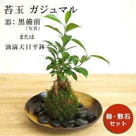 苔玉 ガジュマル 縁起良い 幸運の木 ユニーク 人気 沖縄 ガジュマルの苔玉・器セット