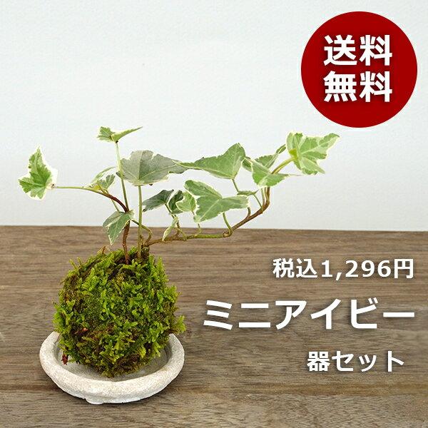 【送料無料!】ミニアイビー(ヘデラ)の苔玉・器セット