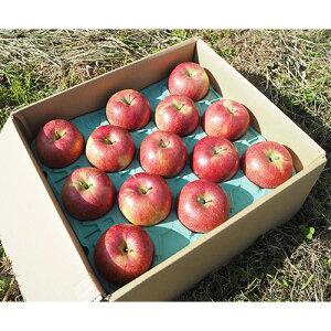 サンふじ りんご 約5kg(12〜16個) さんふじ リンゴ 蜜入り 長野県 信州 家庭用 贈答用 贈り物 ギフト プレゼント