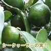 冲绳shikuwasa伊豆味的森林noshikuwasa