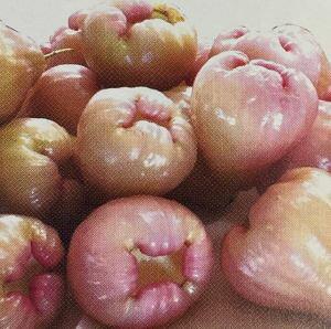 【4月以降出荷予定】オオフトモモ(桃レンブ)桃実(13.5センチポット植え)《熱帯果樹苗》
