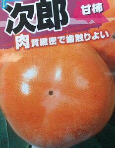 次郎柿(甘柿)《果樹苗》