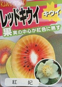 キウイフルーツ:紅妃 こうひ (メス木) 赤実キウイ 《果樹苗》