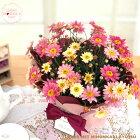 母の日ギフトマーガレットイチゴミルク5号鉢送料無料贈り物プレゼント花鉢植えいちごミルク