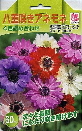 予約販売8月中旬以降発送 花の大和 球根 八重咲きアネモネ4色詰め合わせ60ml