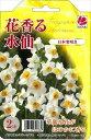花の大和 球根 きゅうこん 水仙 花香る水仙 日本寒咲き 2球