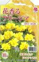 花の大和 球根 きゅうこん 花香るフリージア 一重咲き 黄花種 10球