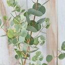ハートリーフユーカリ ウェブステリアナ 9cmポット 観葉植物 ハーブ