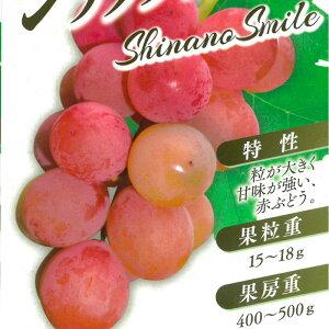 ブドウ シナノスマイル ぶどう苗 葡萄 果樹苗 10.5cmポット