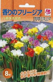 花の大和 球根 きゅうこん 秋植え球根 きゅうこんバラエティ 香りのフリージア八重咲き混合 8球
