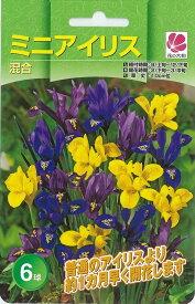 花の大和 球根 きゅうこん 秋植え球根 きゅうこんバラエティ ミニアイリス混合 6球