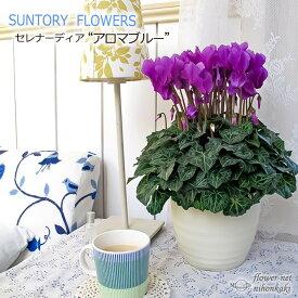 予約販売 サントリーフラワーズ シクラメン アロマブルー 5号鉢 送料無料 観葉植物 苗 セレナーディアシリーズ