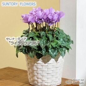予約販売 サントリーフラワーズ シクラメン ライラックフリル 5号鉢 送料無料 観葉植物 苗 セレナーディアシリーズ