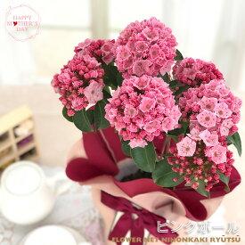 まだまだ間に合う母の日 ギフト カルミア オスボレッド 母の日 贈り物 プレゼント 花 鉢植え 5号鉢 送料無料 母の日2021
