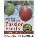 パッションフルーツお得な2個セット!! 夏は涼しく秋は美味しく!! ポット苗