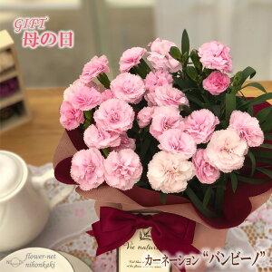 早割 母の日 ギフト カーネーション バンビーノ 4号鉢 送料無料 贈り物 プレゼント 花 鉢植え 母の日2021