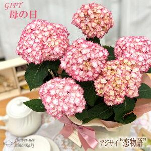 早割 母の日 ギフト アジサイ 恋物語 ピンク 5号鉢 送料無料 贈り物 プレゼント あじさい 紫陽花 花 鉢植え