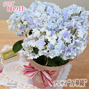 まだまだ間に合う母の日 ギフト アジサイ 万華鏡ブルー 母の日 贈り物 プレゼント あじさい 紫陽花 花 鉢植え 5号鉢 送料無料