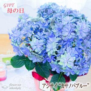 早割 母の日 ギフト アジサイ カサノバブルー 5号鉢 送料無料 贈り物 プレゼント あじさい 紫陽花 花 鉢植え