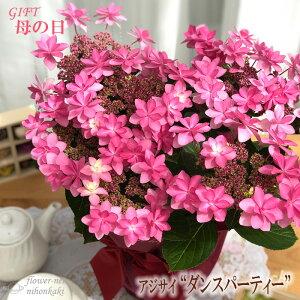 まだまだ間に合う母の日 ギフト アジサイ ダンスパーティー 母の日 贈り物 プレゼント あじさい 紫陽花 花 鉢植え 5号鉢 送料無料