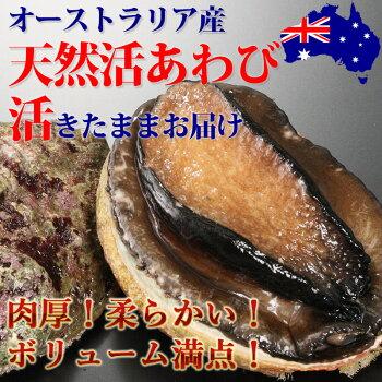 オーストラリア産天然活あわび(300/400g)