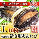 活蝦夷あわびL(90/100g)10枚入ギフトにも最適送料無料!