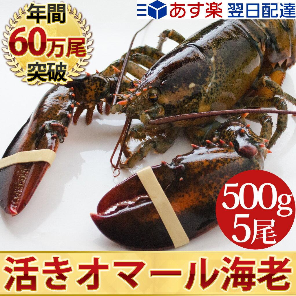 天然 活オマール海老(500g)5尾入BBQに!お中元ギフトにも最適送料無料!