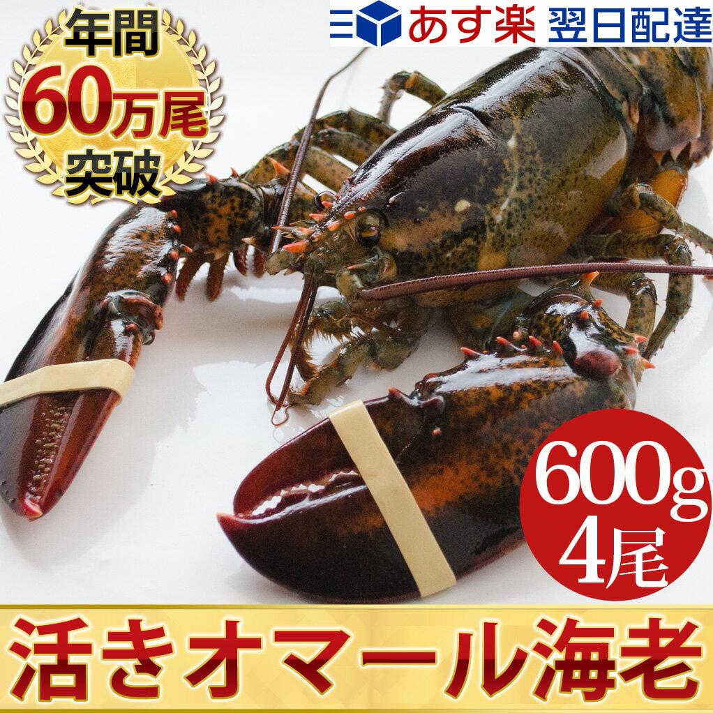 天然 活オマール海老(★特大600g)4尾入BBQに!ギフトにも最適送料無料!