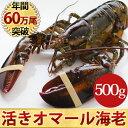 天然 活オマール海老(500g)1尾入