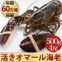 天然 活オマール海老(500g)4尾入