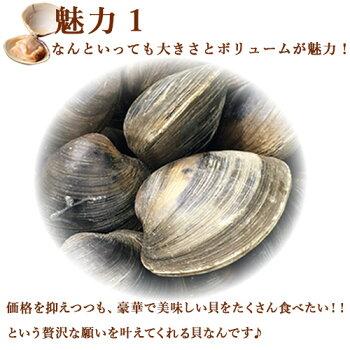 活きホンビノス貝・白はまぐり(サイズ無選別)3kg入