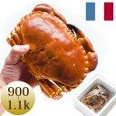 天然ボイル済ヨーロッパイチョウガニ(900/1.1kg)1杯