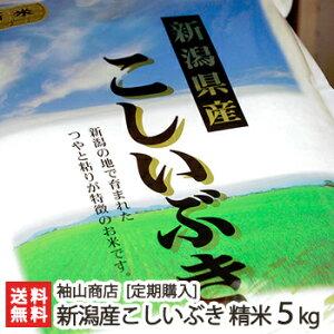 【定期購入】新潟産 こしいぶき 精米5kg 袖山商店 米屋の蔵出し米【新潟産コシイブキ/白米】【送料無料】