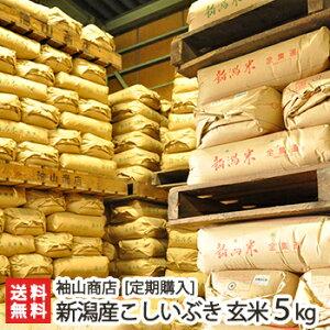 【定期購入】新潟産 こしいぶき 玄米5kg 袖山商店 米屋の蔵出し米【新潟産コシイブキ】【送料無料】