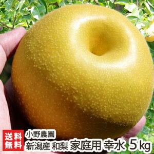 訳あり!新潟 小野農園の日本梨 家庭用 幸水 5kg(11〜13玉)【幸水梨】【送料無料】