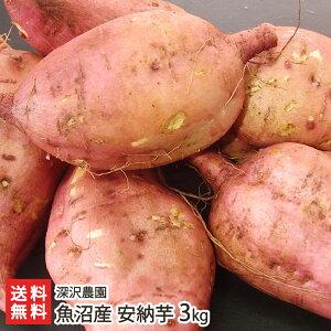 魚沼産 低温熟成さつまいも 安納芋(あんのういも)通常サイズ 3kg(1本あたり80〜300g)深沢農園 【アンノウイモ/さつま芋/サツマイモ/焼き芋/スイーツ】【お歳暮に!ギフトに!贈り物・内